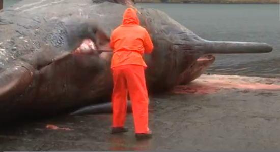 突然のクジラ爆発!!