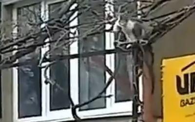 木登りでわが子と3階の家に帰る猫。