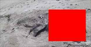 【画像】ニュージーランドの海に打ち上げられたUMAが恐竜っぽい