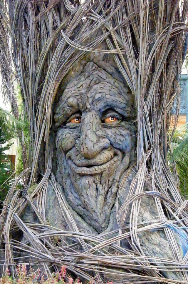 奇妙な場所に生育する奇妙な木