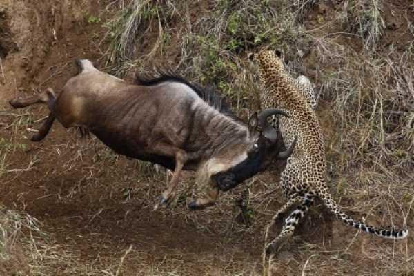 Animal-Battles-12_R