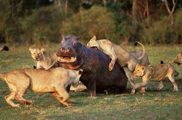 Animal-Battles-16_R