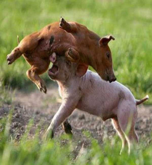 Animal-Battles-30_R