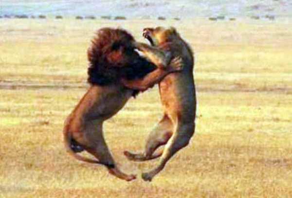 Animal-Battles-39_R