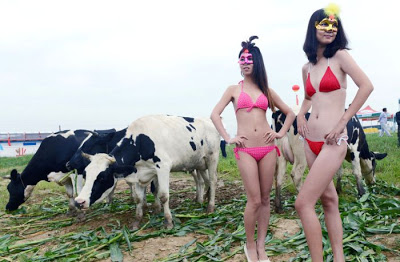 Dairy-Cow-Pageant-china-02