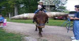 【画像】世界最大の角をもつ牛がすごすぎ