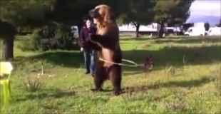 【動画】中に人が入ってんじゃないか?と疑ってしまう熊