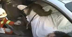 【動画】自動車事故で鉄パイプが運転手に貫通