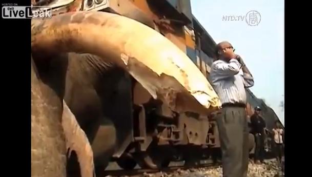 インドで巨大な象が列車にはねられる