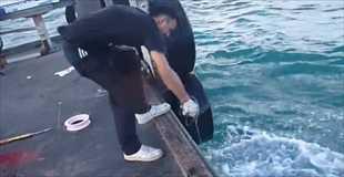 【動画】釣竿なしで巨大カンパチを釣るこの男何者?