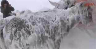 【動画】寒すぎて全身凍りついてしまったロバ(゜ロ゜)