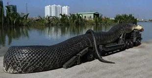 【動画】400人の人間を喰った?紅海で見つかった巨大なヘビ