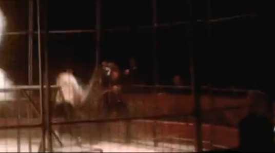 【動画】サーカスの調教師に襲いかかった虎をおっさんが棒で殴りまくる!