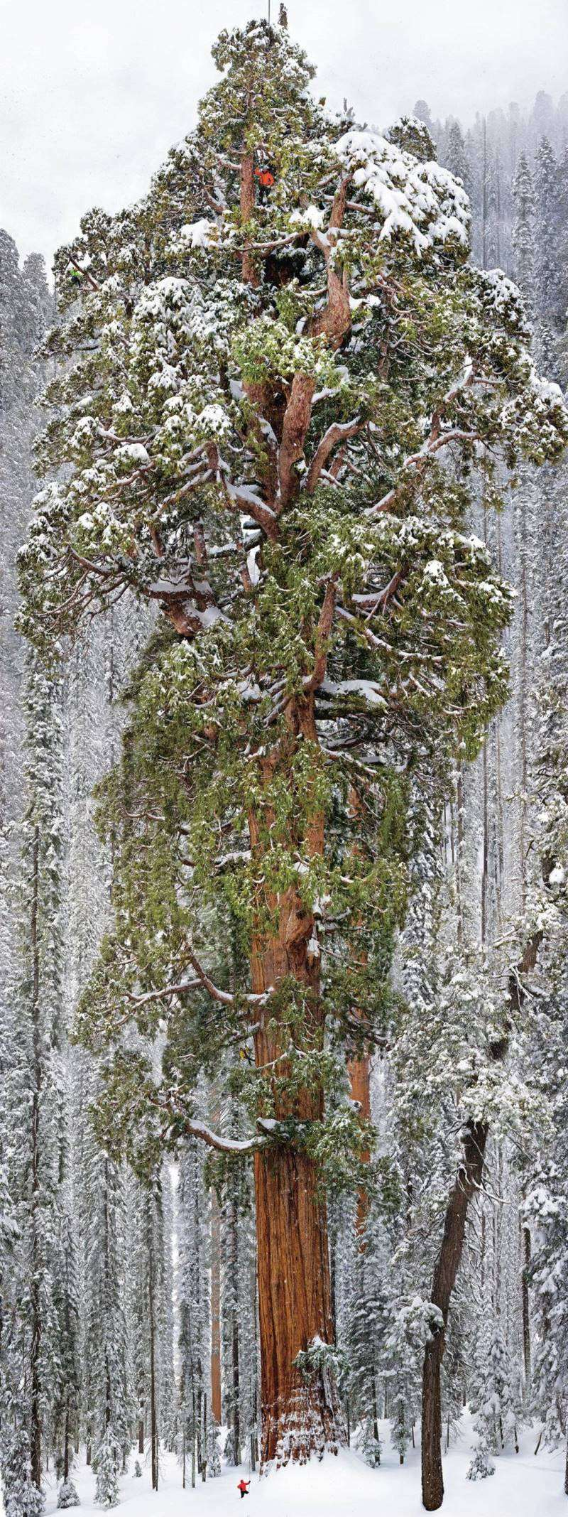 3200-year-old-tree-sequoia-national-park_R
