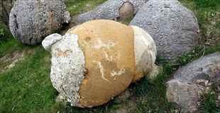 【画像】衝撃!成長する岩