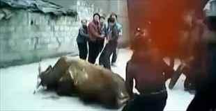 【動画】祭りのためなら牛も殺します