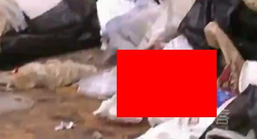 【動画】生まれたばかりの○○○がゴミ捨て場で見つかりました。