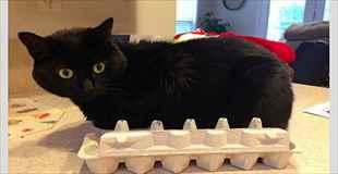 【猫萌え注意】猫ちゃんは狭いところがお好き