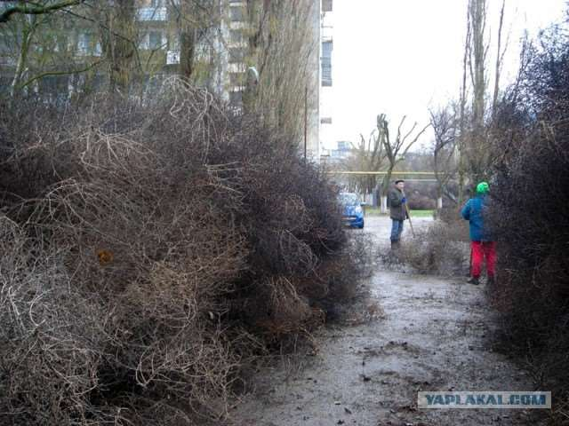 plantsattack001-29