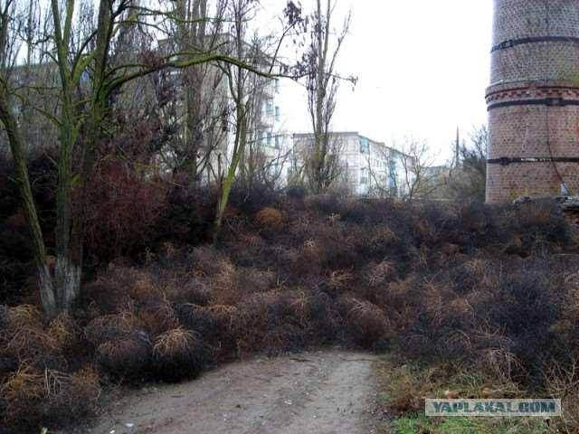 plantsattack001-59