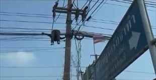 【動画】電線にぶら下がっている遺体を回収する仕事