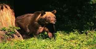 【画像】熊にキスされた結果