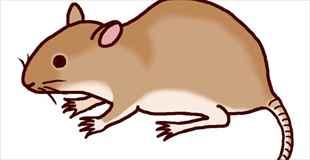 【画像】家にネズミが出たんだけど、これは…