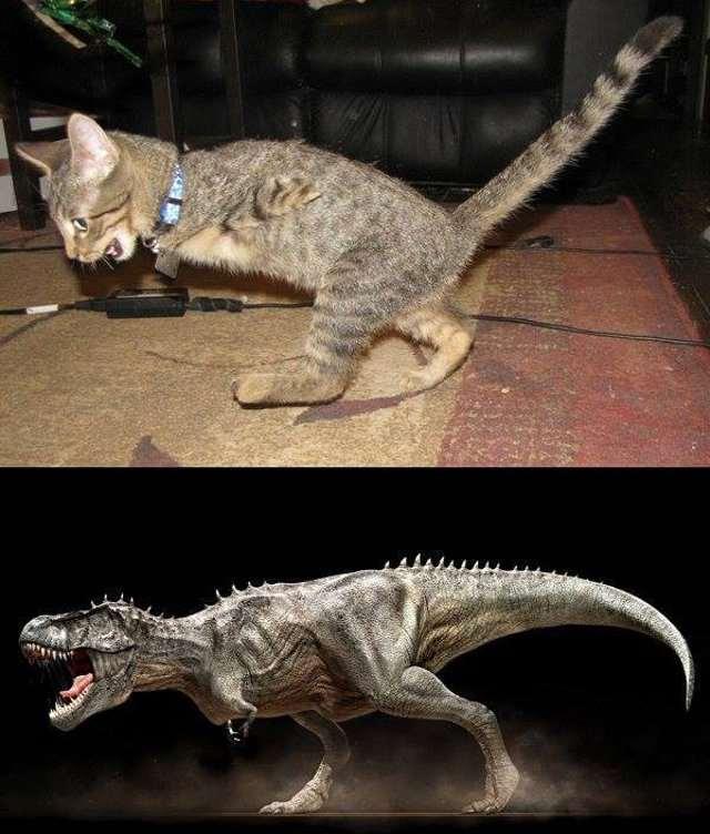 t-rex-kitty