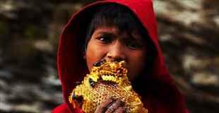 【画像】ネパールの「ハニーハンター」の現場がすごすぎる