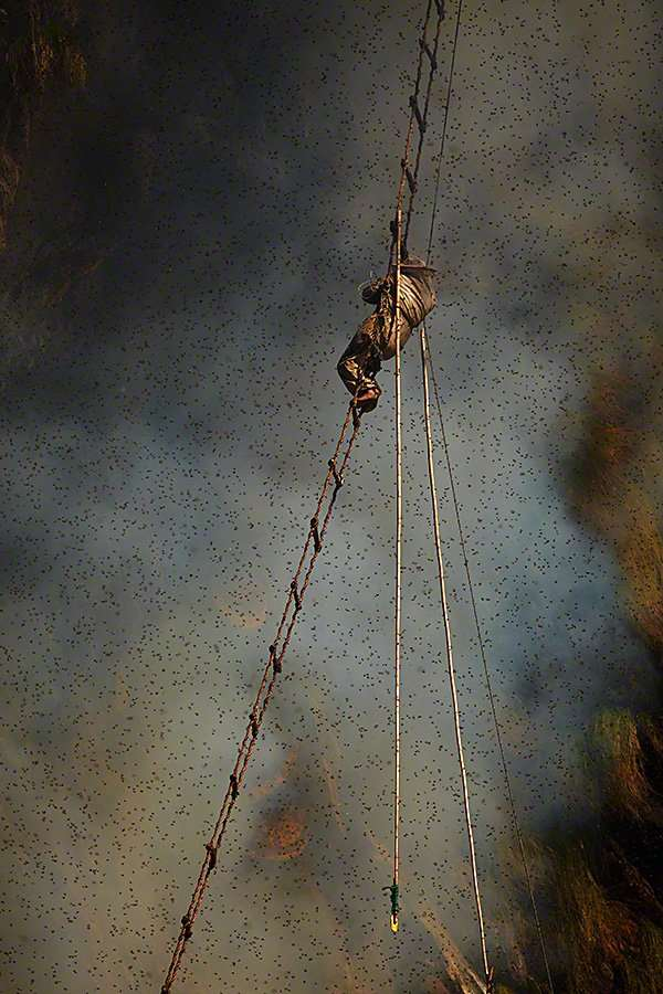 gurung-honey-hunters-high-ladders