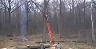 【動画】伐採された木は、ささやかな復讐を実行する