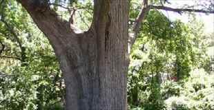 【芸術】もしかしたら世界で最も美しい木の彫刻かもしれない