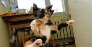 【萌え注意】可愛すぎる!忍者猫と呼ばれる猫ちゃん達