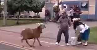 【動画】路上でヤギが攻撃してくるのウザすぎ