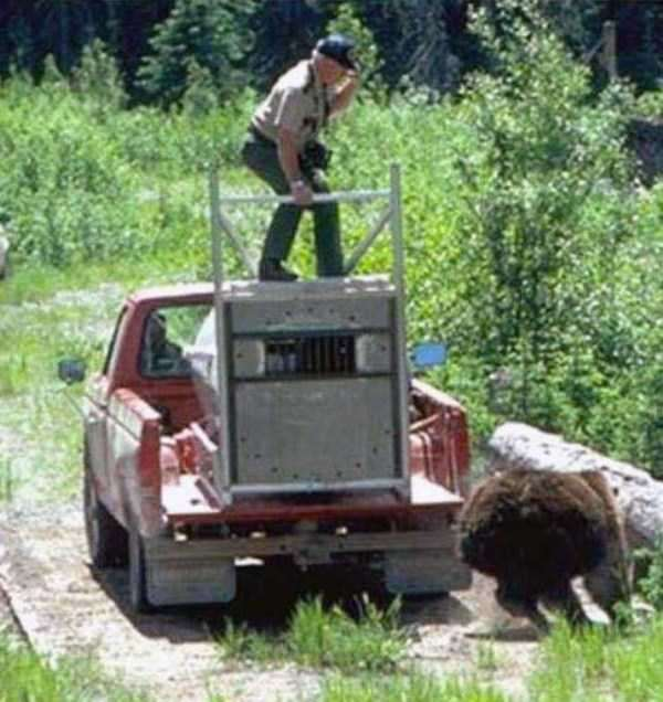 grizzly-attack-3