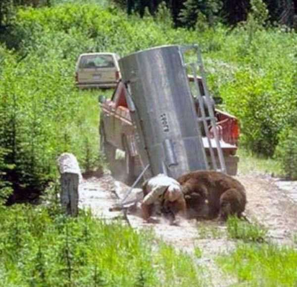 grizzly-attack-7