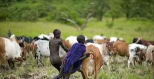 【画像】エチオピアの部族は干ばつになると血を飲むらしい