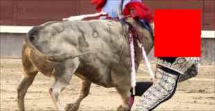 【衝撃】闘牛士の顎を貫いた雄牛がマジでヤバイ