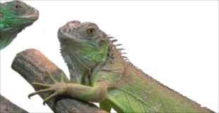 【画像】爬虫類のペット飼ってる人の冷凍庫ってみんなこんな感じなの?