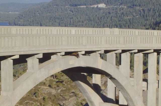 a_daring_bear_rescue_from_a_bridge_640_05