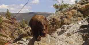 【画像】なんでこんなところに落ちちゃったの、この熊さんは