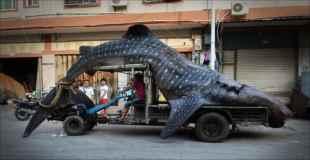 【画像】中国で捕獲されたジンベイザメ