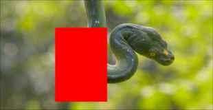 【画像】仲の良過ぎるヘビとカエルがいると話題に