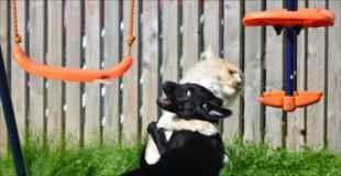【画像】動物達のオモシロ可愛い瞬間集めました