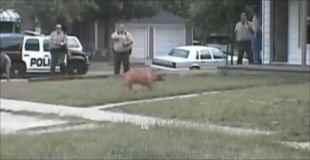 【動画】襲って来た犬を撃ち殺す警官達