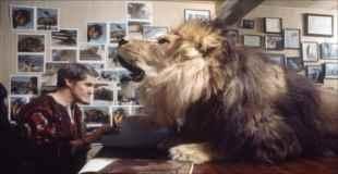 【画像】ペットとしてライオンと一緒に暮らす人たち