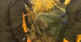 【驚愕】漁師が仕掛けた網にまさかのアイツがかかる