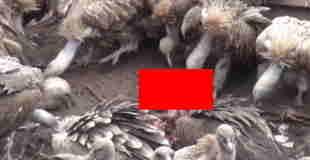 【閲覧注意】チベットの鳥葬の動画。