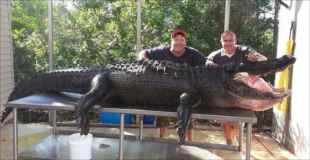 【画像】350キロのワニを素手で捕まえたとかマジか