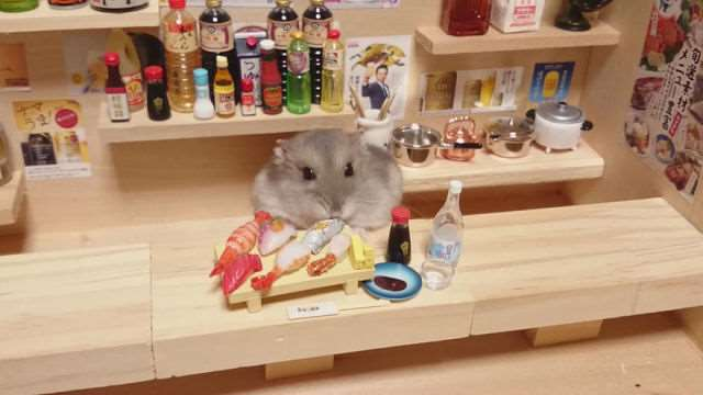 bartending_hamsters_are_one_of_the_cutest_things_ever_640_03